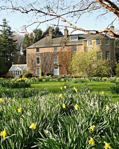 Backhouse Daffodils